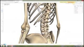 Тема: «Целостная анатомия костей и мышц. Остеопатия в массаже.(Правообладатель видео школа массажа