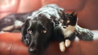 Как убрать шерсть животных с одежды в домашних условиях?