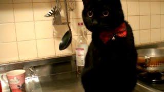 猫のキッチン(台所)対策をしないとこうなるニャン♪ thumbnail