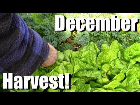 December Vegetable Garden Harvest (Zone 5): Local Food at its Best!