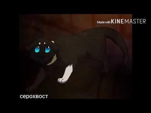 Коты воители клип-они смеялись мне вслед