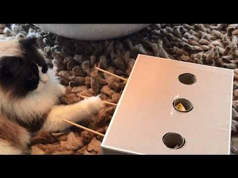 Timo the Cat learns to play whack-a-mole by himself