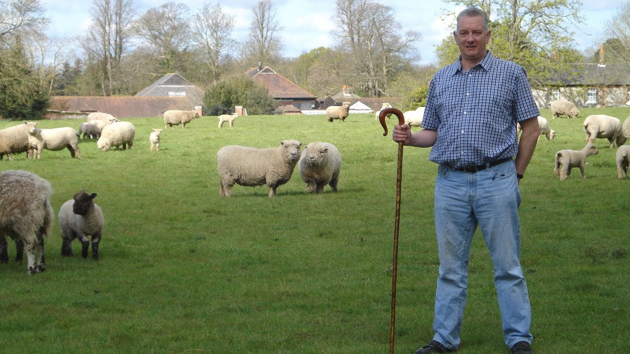 sheep flock health care of ewes u0026 lambs youtube