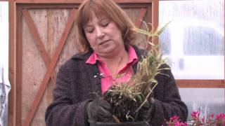 Gardening: Caring for Plants : How to Grow Bamboo Cuttings