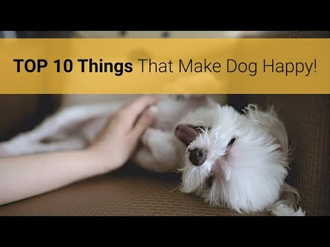 🐕 How To Make Your Dog Happy? Top 10 Things That Make Your Dog Happy & Satisfied!