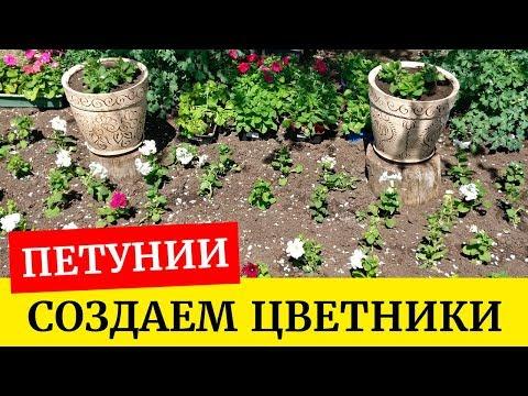 🌸Создаем цветники из петуний. Высадка петуний в открытый грунт и большие вазоны🌸