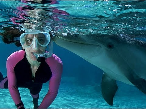 SNORKELING COZUMEL WITH DOLPHINS | Swimming With Dolphins Cozumel Www.CozumelCruiseExcursions.NET
