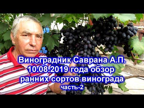 Обзор сортов винограда 10.08.2019 - часть2