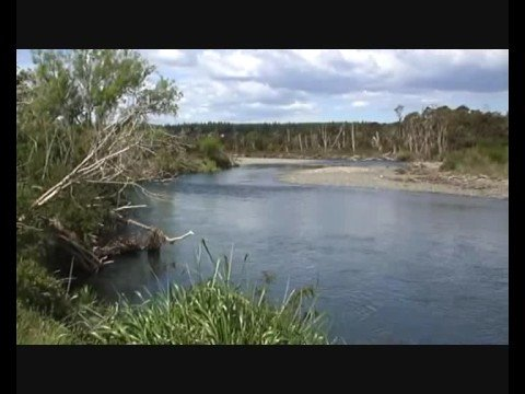 A Few Hours On The Tauranga Taupo With Dragonfly River Guide