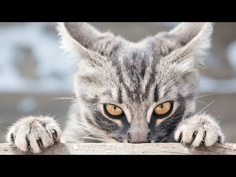 Funny Stalking Cat Video Compilation Part 2
