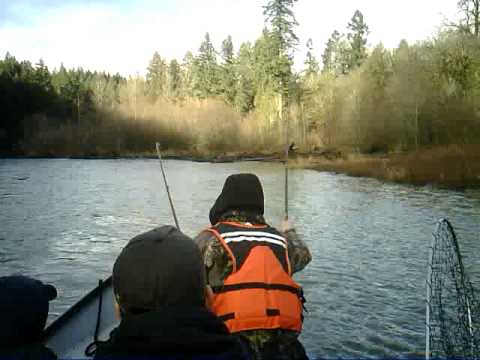 2010 nisqually river chum 1 youtube for Nisqually river fishing