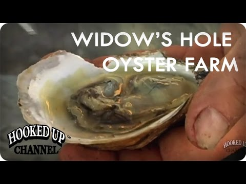 Widow's Hole Oyster Farm | food.curated. | Hooked Up Channel