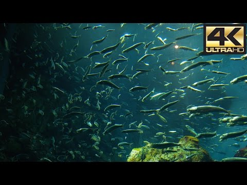 Osaka Aquarium 4K