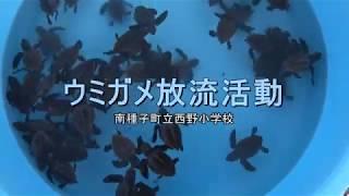 種子島の学校活動:西野小学校ウミガメ放流活動2018年