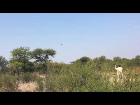 Wingshooting @ Gateway To Africa Safaris
