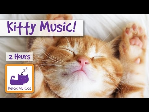 Kitty Music. Relaxing Music for Cats and Kittens!