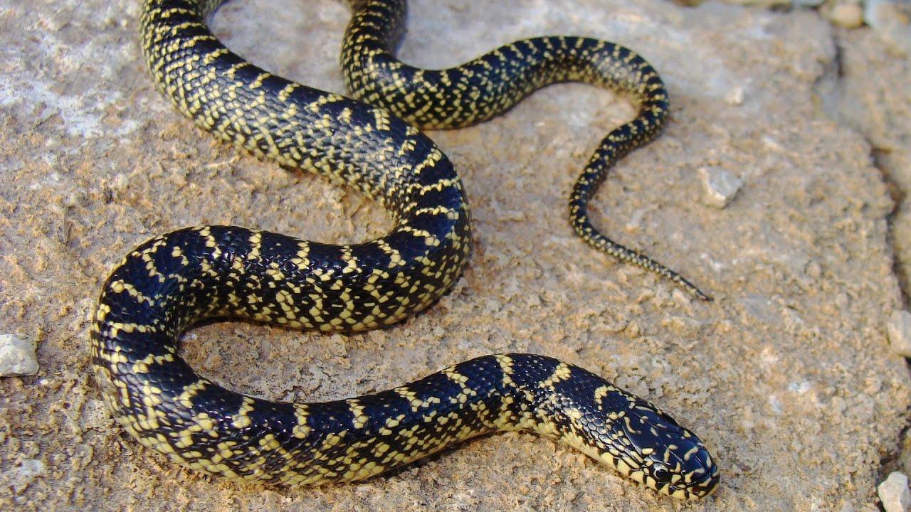 Common Snake Illnesses Pet Snakes Youtube