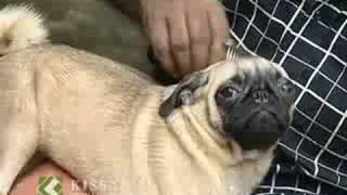 Dog keeping: പട്ടി വളര്ത്തല് : Success story