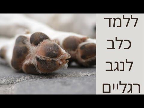 איך ללמד כלב לנגב רגליים - טל שלוש מאלף כלבים בכיר