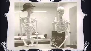 OUWB Medical Library Skeletons - Adventures of Indiana Bones, Nettie, Bob and Bobette
