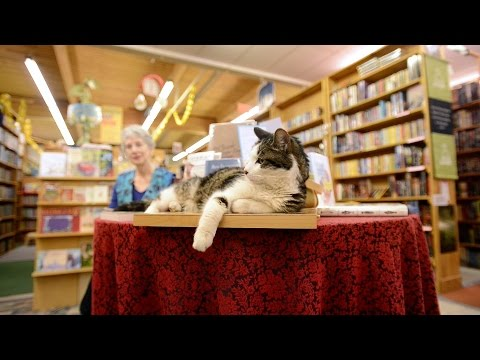 Henry the bookstore cat