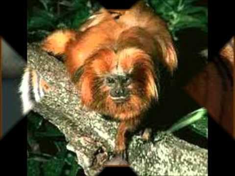 ANIMAIS SELVAGENS.wmv Travel Video