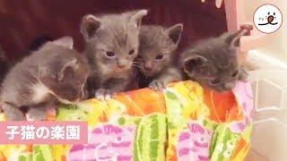 初めてお外へ出かける子猫ちゃんたち【PECO TV】