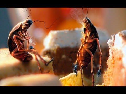 А вы знаете, зачем нужны тараканы?