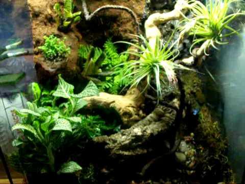 Dart frog vivarium - YouTube 10 Gallon Paludarium