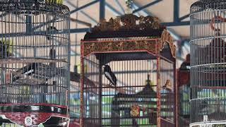 Single Terbaru -  Piala Kota Pendekar Madiun Pbi