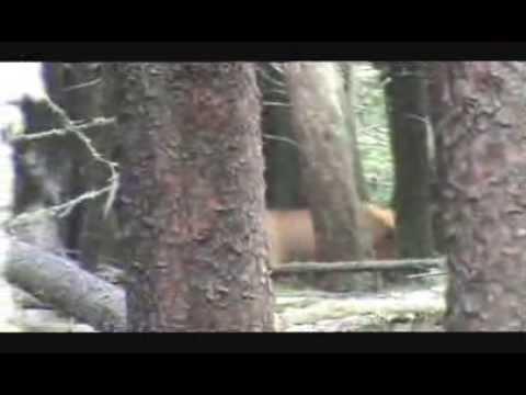 2013 Archery Cow Elk Hunt