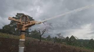 Irrigating tea in Western Uganda with a brass impact raingun