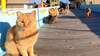貓島上的貓吃早餐