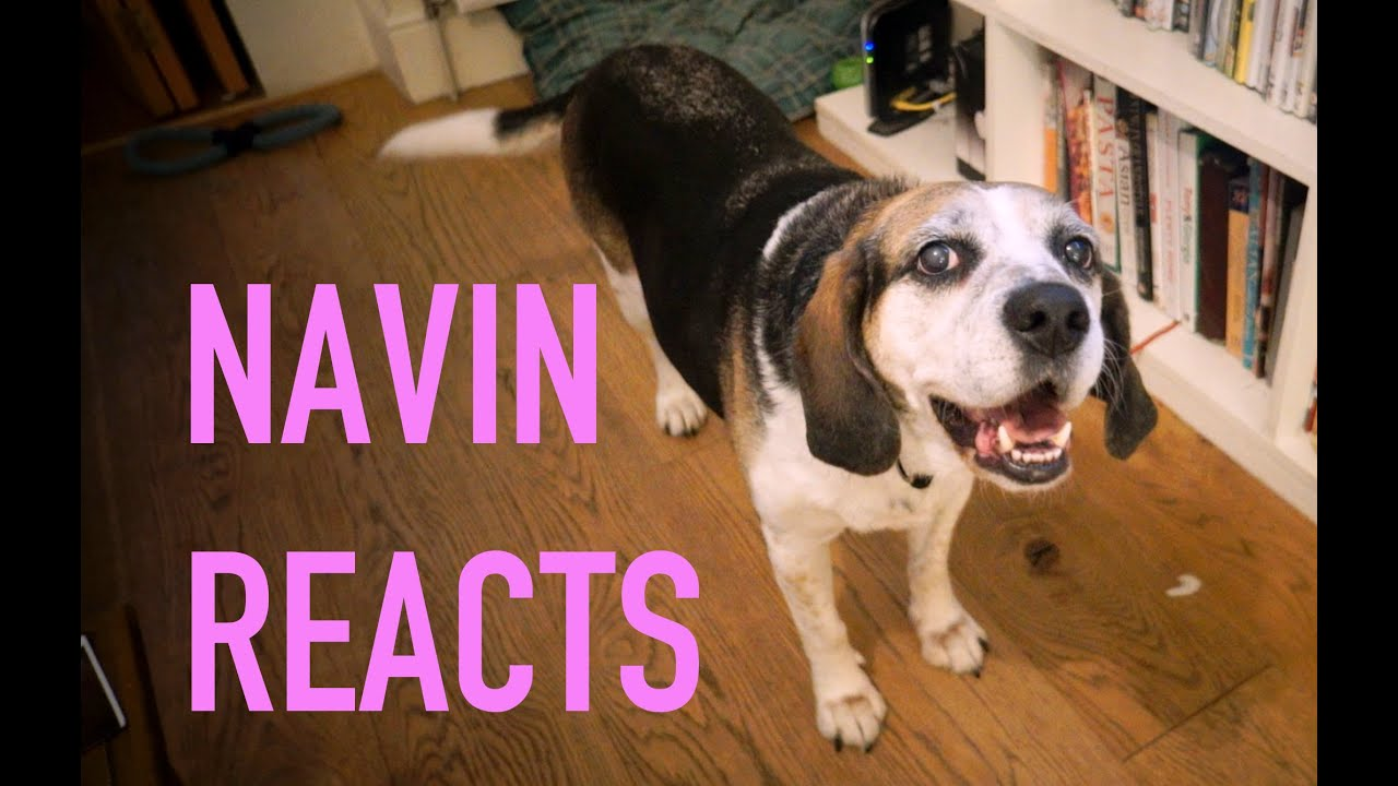 Navin Reacts Dog To Squeaky Toy Sound Effect