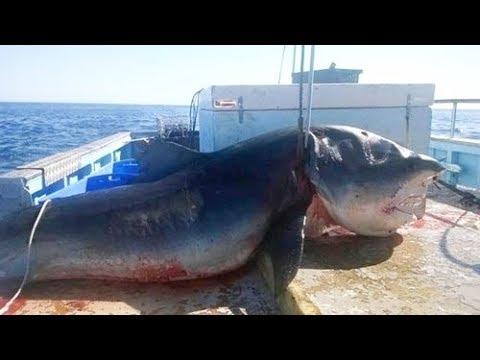 Ninguém acreditaria nessas Pescas, se não fosse gravado!!