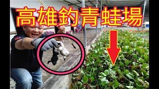 台灣竟然有釣!!青蛙場!!感覺比釣蝦還刺激!!超好玩!!超簡單