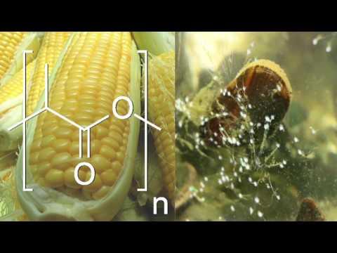 Biodegradable Adhesive: Corn-based Polymer + Shellfish Chemistry