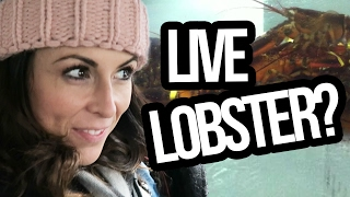 SENDING VALENTINE'S DAY LOBSTERS!?! (Lunchy Break)