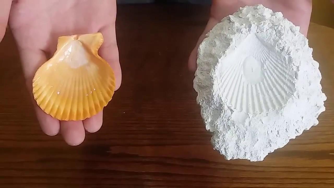 Como hacer un f sil casero con yeso fosilizaci n for Como hacer un criadero de peces casero