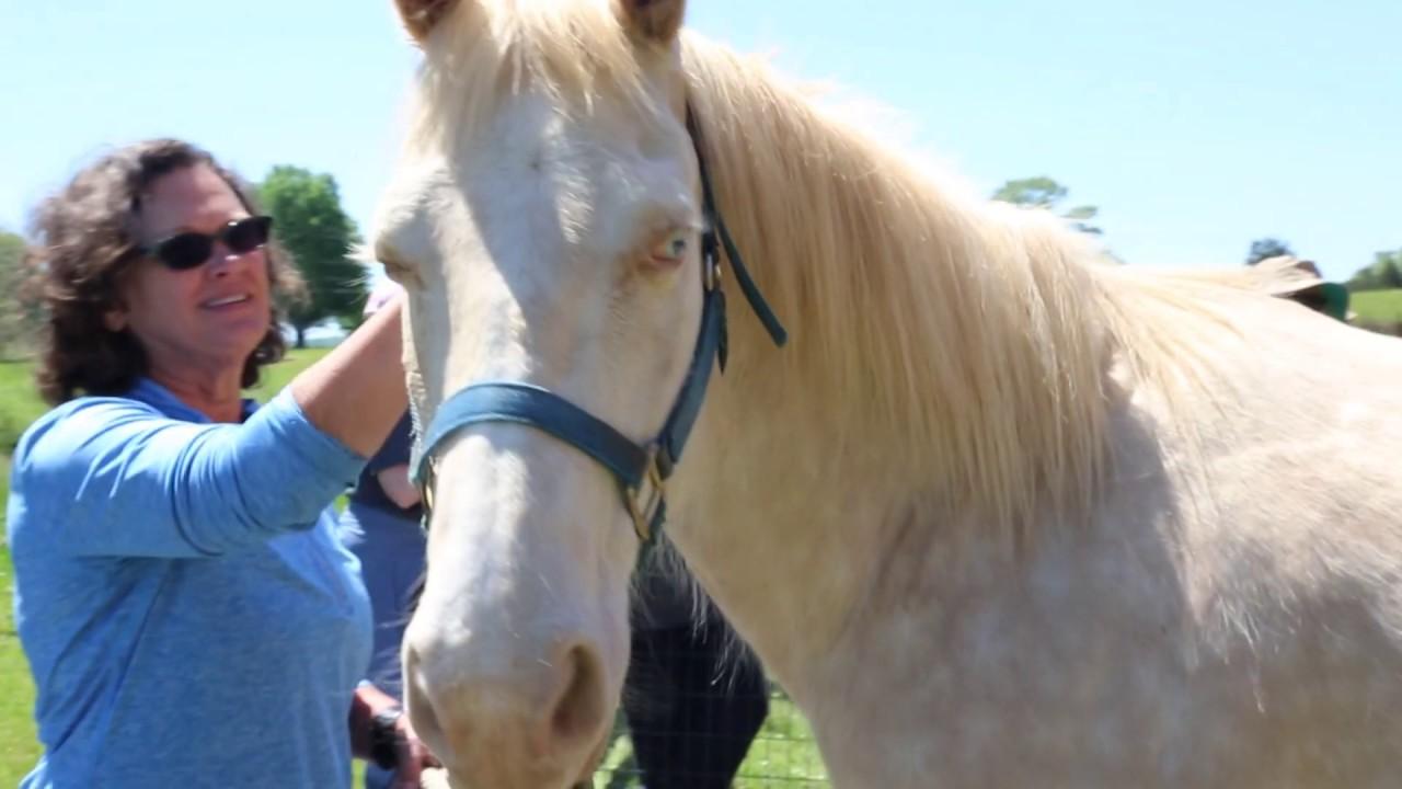 2019 Be More Award - Faith N Friends Horse Rescue