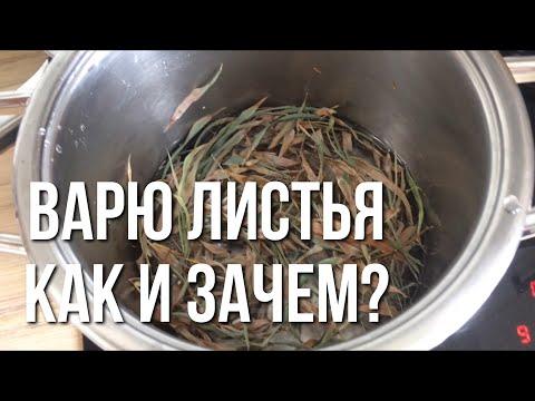 Как варить листья для аквариума, зачем это нужно