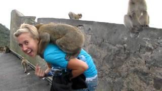 Wild monkeys playing on Steph at Gibraltar