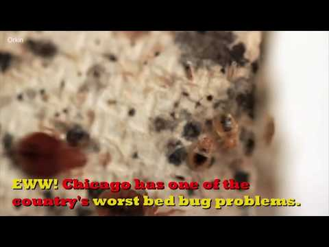 Lance Houston - Chicago Has a HUGE Bed Bug Problem
