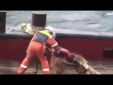 Anchor Handling Accident