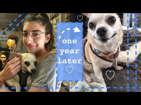 I adopted a senior dog and I love him