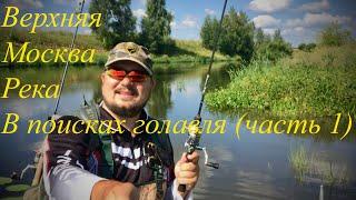 Верхняя Москва река. В поисках голавля (часть 1)