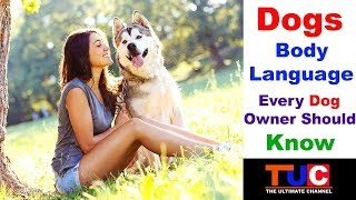 Dogs Body Language Every Dog Owner Should Know : TUC : The Ultimate Channel