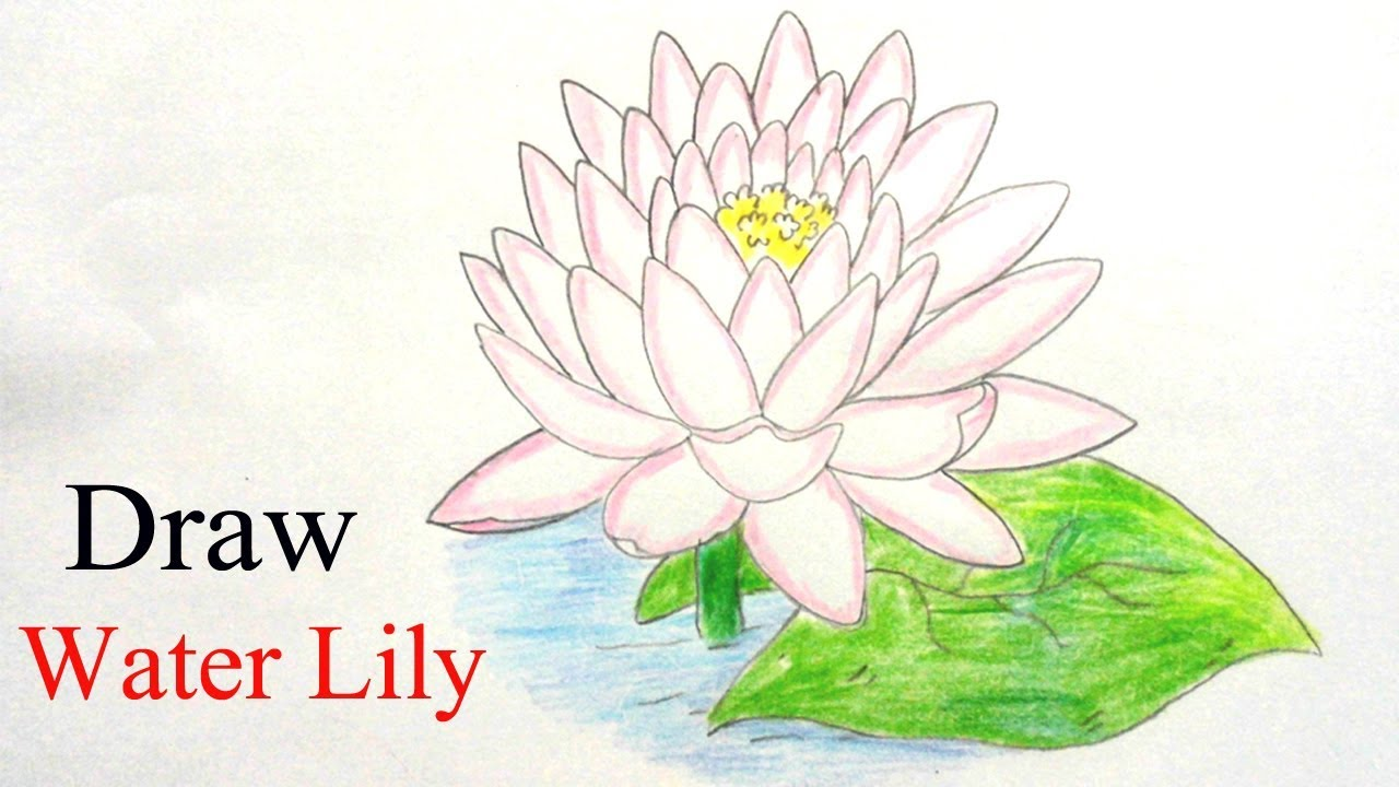 How to draw water lily step by step ||very easy|| - YouTube