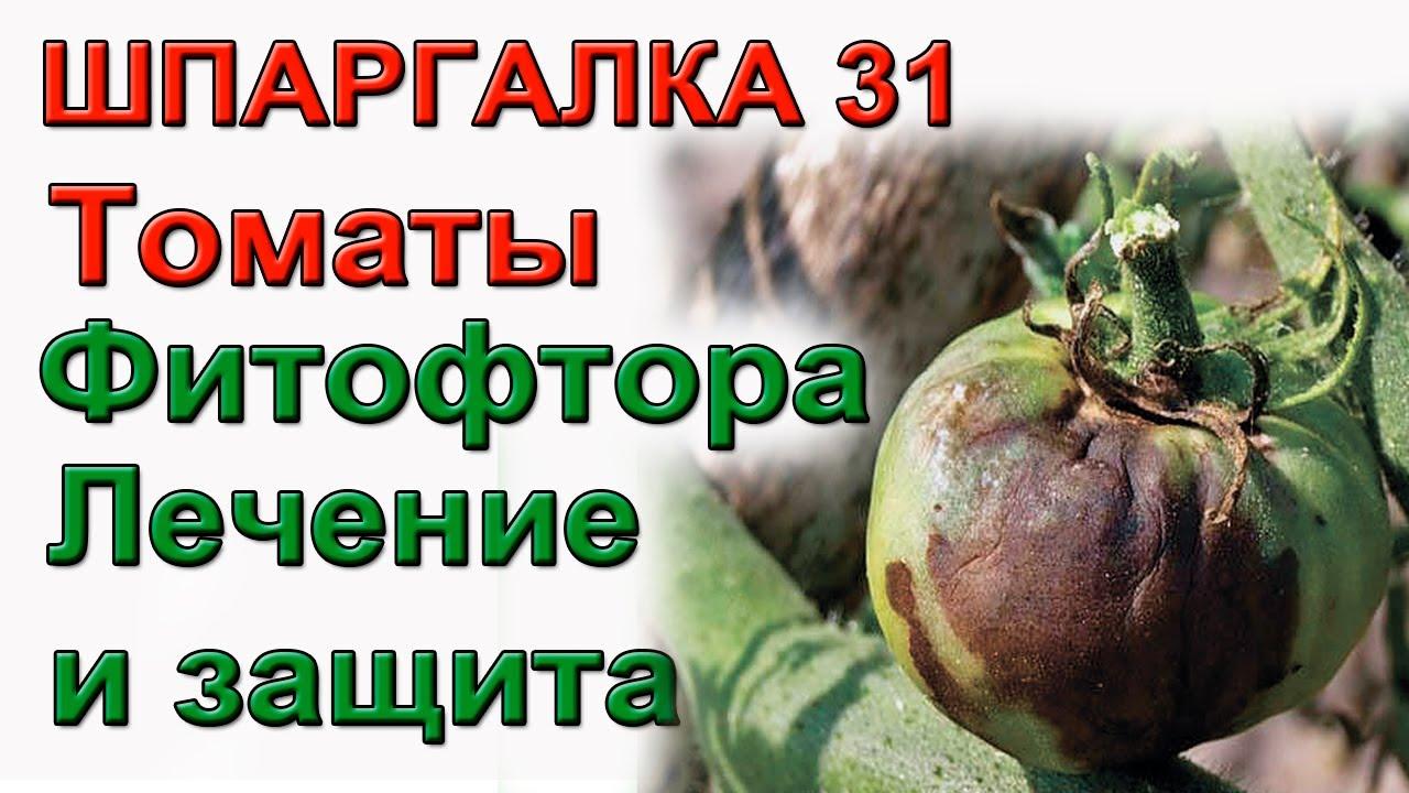 Фитофтора  Лечение и профилактика ШПАРГАЛКА 31
