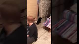 Funny short cat video #1